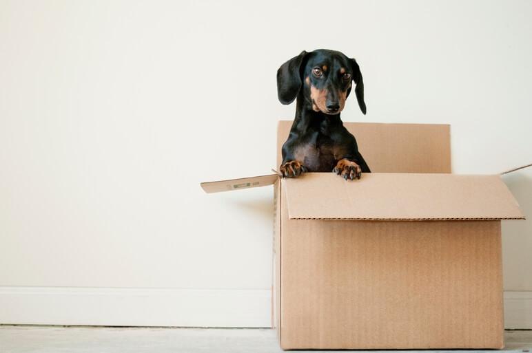 Verhuizen stress tips